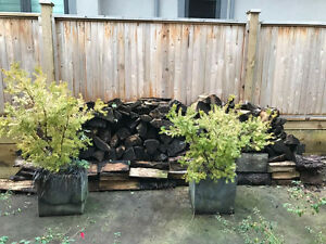 Firewood to give away North Shore Greater Vancouver Area image 1