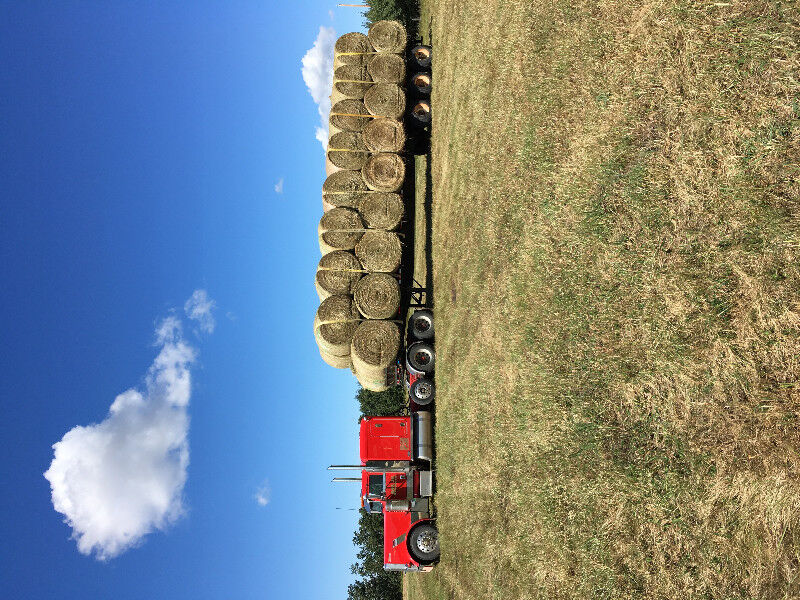 Cattle and Hay bale hauling   Other   Red Deer   Kijiji