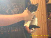 4 month old female kitten to give to a good home