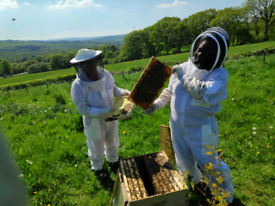 Bee keeping lessons, Bee Experience from Humble Bee