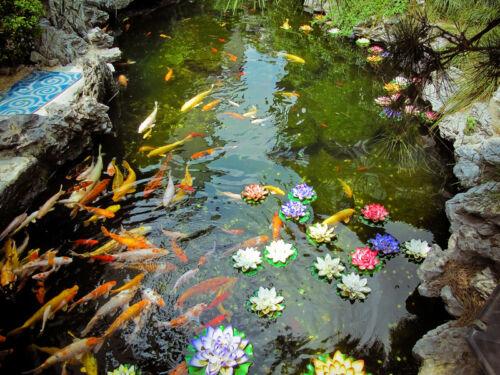 Wo sich fische am liebsten tummeln wissenswertes ber die for Fische die algen fressen im teich