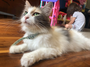 2 year old female cat, looking to rehome