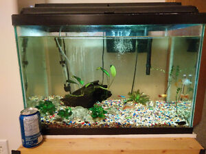 20 gallon complete aquarium set with fishes and plants