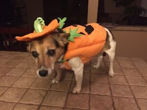 Halloween costumes for Dogs London Ontario image 1