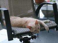 Abandoned 8-month old cat needs a loving home
