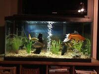 30 GALLON FISH TANK WITH FISH. NEED NOTHING. PERFECT CONDITION!