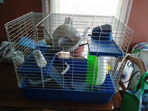 Articles pour lapin, rat et hamster