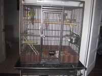 oiseaux + cage