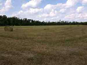 40 Acres on County Road 6, 10 minutes to Cat Centre Kingston Kingston Area image 2