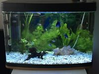 Fish tank 70l with stand 18 fish all accessories