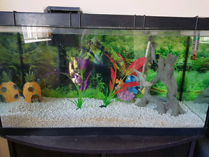 30g fish tank with fish
