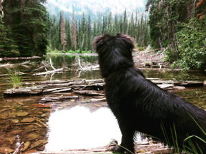 Offering pet sitting in the bow valley