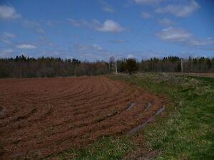 LITTLE HOBBY FARM IN PARADISE