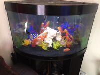 190L corner fish tank
