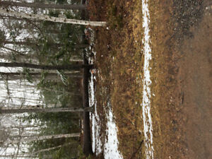 Lot for sale twenty second walk from Montague river deeded right