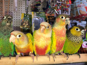 FREE CAGE PROMO *EXOTIC PETS* we are open victoria day