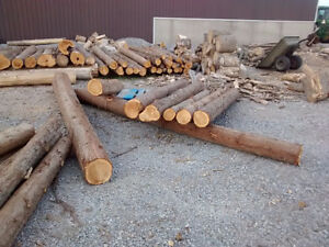 Cedar pole posts logs and 3-4 year old cedar hedge trees Kawartha Lakes Peterborough Area image 6