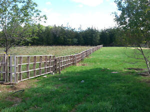 SPRING SPECIAL!!! Pasture Reclamation/Brush Clearing with Goats!
