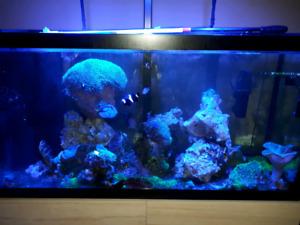 Aquarium 90gal eau salée