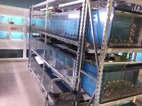 Fishroom Tanks & Racking for Sale