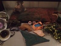 Barely used Reptile tank and accessories