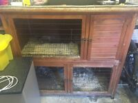 X2 female Guinea Pigs with 2 cages and 2runs