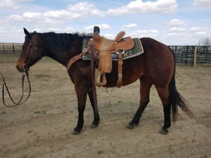 Heel Horse / 4H horse for sale
