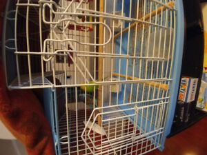 2 Budgies with Cage.