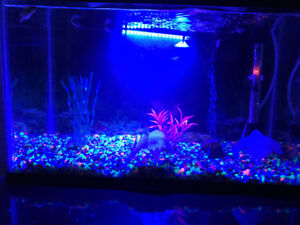 10 G Aquarium for sale-Comes with free items, fish etc..