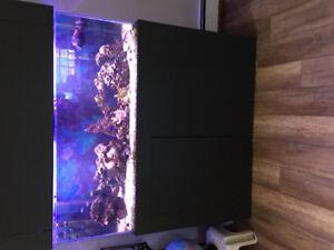 """55 Gal Saltwater Aquarium """"REDUCED PRICE"""""""