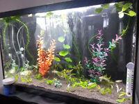 Superb aquarium (40 gallons) complete et fonctionnel