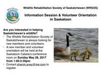 Wildlife Rescue Opportunities