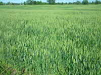 .99acre for sale or Rent to Own Land Grimsby(Just under an acre)