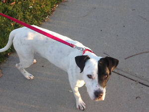 Niagara dog rescue needs your help.Please help Penny.Foster home
