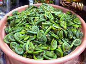 FRESH FIDDLEHEADS FOR SALE