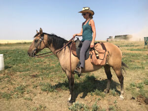 Horse for sale: Mare