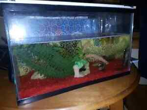 NEED GONE  10 Gallon Tank with Pleco, Jack Dempsey &  2 Snails Windsor Region Ontario image 1