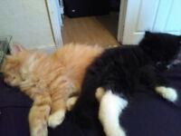 2 little kittens for sale
