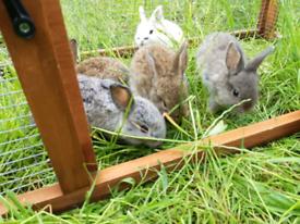 Baby bunnies 🐰 + Food sample 🥕
