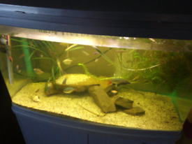 Selling my lovely fish tank everything included