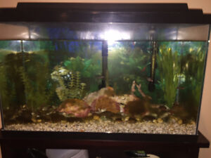 33 Gallon Fish Tank
