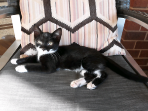 FREE TO A GOOD HOME - Kitten / Cat - very friendly