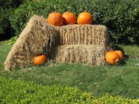 Square Bales of Straw