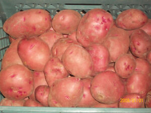 Red Potatoes awesome for the barbeque.