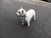 Dog Walking/Sitting in Derby