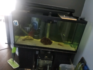 90 gallon tank and stand