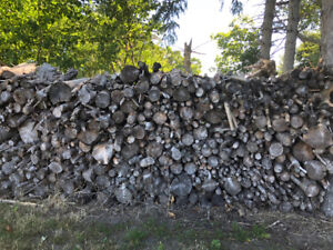 Lots of Firewood!