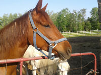 Reg QH mare for sale