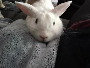 Year old bunny looking for a home Peterborough Peterborough Area image 2