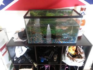 Lil fish tank